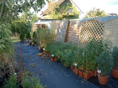 ogrodnictwo 9