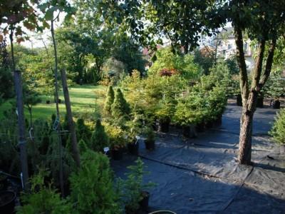 ogrodnictwo 11