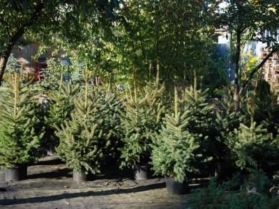 ogrodnictwo 12